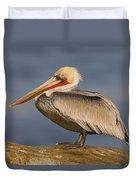 Brown Pelican Portrait California Duvet Cover