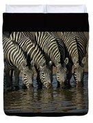 Burchells Zebra Equus Burchellii Herd Duvet Cover
