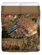 Burrfish And Cleaner Goby Duvet Cover