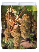 Chardonnay Grapes In Vineyard, Carneros Duvet Cover