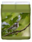 Chesnutsided Warbler Duvet Cover
