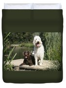 Chocolate And Cream Labradoodles Duvet Cover