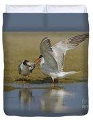 Common Tern Sterna Hirundo Duvet Cover by Eyal Bartov