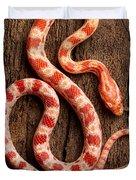 Corn Snake P. Guttatus On Tree Bark Duvet Cover