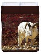 Dall Sheep Duvet Cover