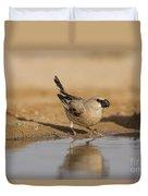 Desert Finch Carduelis Obsoleta Duvet Cover