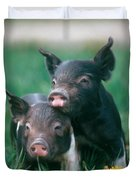 Domestic Piglets Duvet Cover