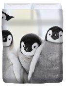 Emperor Penguin Chicks Duvet Cover
