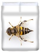 Eristalinus Taeniops Hoverfly Isolated Oin White Background Duvet Cover