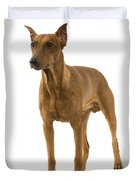 German Or Standard Pinscher Duvet Cover