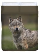 Gray Wolf  North America Duvet Cover