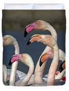Greater Flamingos, France Duvet Cover