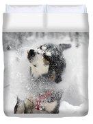 Husky Dogs Pull A Sledge  Duvet Cover