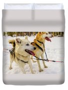 Husky Sled Dogs, Lapland, Finland Duvet Cover