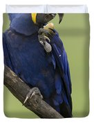 Hyacinth Macaw Eating Palm Nut Duvet Cover