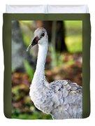 Juvenile Sandhill Crane Grus Canadensis Pratensis II Usa Duvet Cover