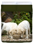 Labrador Puppies Eating Duvet Cover