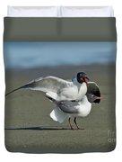 Laughing Gulls Duvet Cover