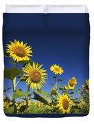 Laval, Quebec, Canada Sunflowers Duvet Cover