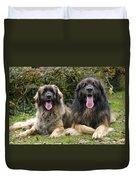 Leonberger Dogs Duvet Cover