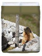 Little Marmot Duvet Cover