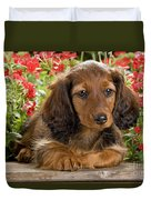Long-haired Dachshund Duvet Cover