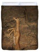 Male Gerenuk Duvet Cover