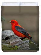 Male Scarlet Tanager Duvet Cover