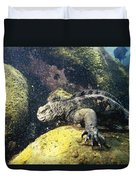Marine Iguana Grazing On Seaweed Duvet Cover