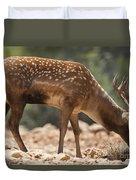 Mesopotamian Fallow Deer 2 Duvet Cover