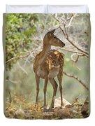 Mesopotamian Fallow Deer 5 Duvet Cover