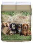 Miniature Long-haired Dachshunds Duvet Cover