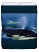 Orca Whale Surfaces In Lynn Canal Duvet Cover