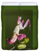 Orchid Mantis Duvet Cover