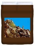 Peninsular Bighorn Sheep From Borrego Palm Canyon Trail In Anza-borrego Desert Sp-ca Duvet Cover