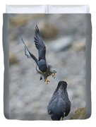 Peregrine Falcons Mating Duvet Cover
