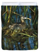 Pied-billed Grebe Nesting Texas Duvet Cover