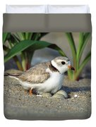 Piping Plover Charadrius Melodus Duvet Cover
