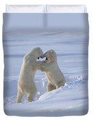 Polar Bear Males Sparring Churchill Duvet Cover