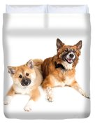 Icelandic Sheepdog Puppy And Adult  Duvet Cover