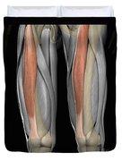 Rectus Femoris Muscles Duvet Cover