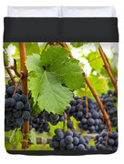 Red Wine Vineyard 3 Duvet Cover
