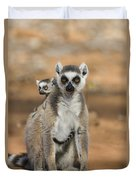 Ring-tailed Lemur And Baby Madagascar Duvet Cover