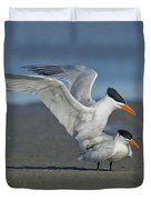 Royal Terns Duvet Cover