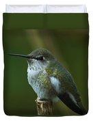 Rufus  Humming Bird  Duvet Cover