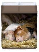 Sleeping Hogs  Duvet Cover
