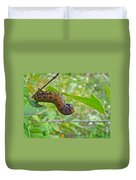 Snowberry Clearwing Hawk Moth Caterpillar - Hemaris Diffinis Duvet Cover