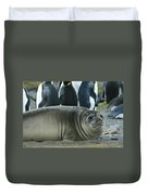 Southern Elephant Seal  Duvet Cover