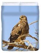 Steppe Eagle Aquila Nipalensis Duvet Cover