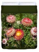 Straw Flowers Xerochrysum Bracteatum Duvet Cover